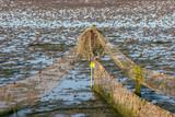 Fischreuse bei Ebbe
