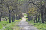 Caminos de campo - 245214361