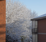 winter scene with snow