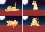 Fototapeta Koty - Set of cat on the roof © GraphicsRF