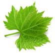 Leinwandbild Motiv Grape leaf isolated on white