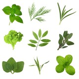 set of herbs isolated on white background - 245338191