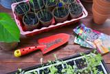 Spring seedling of flowers and vegetables - 245355975