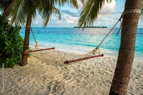 hammock on a palm tree near sea ocean sky shore sand
