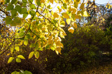 Herbsttag im Park, die Sonne scheint - 245442743