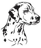 Decorative portrait of Dog Dalmatian vector illustration