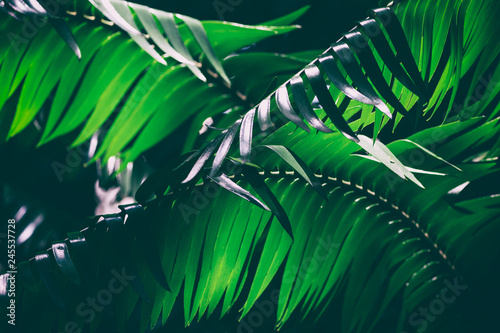 Dark palm leaves background image