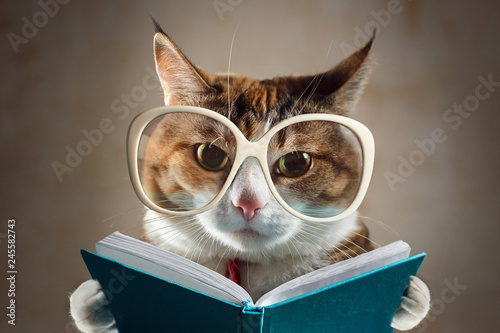 Cat in glasses holding a turquoise book and strictly looks into the camera. Concept of education, knowledge, etc.