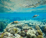coral and tropical fish, coral reef life, colorful corals, landscape