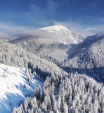Aerial view at the winter mountains. Forest from air. Winter landscape from a drone. Snowy landscape. Aerial photography - 245683570