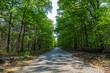 ein schöne Wald im Frühling und ein langer Weg