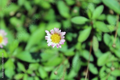 Fiore Giallo E Lilla Con Sfondo Verde Buy Photos Ap Images