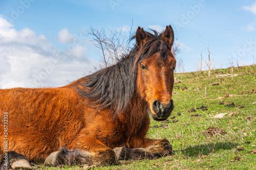 wild mountain horse