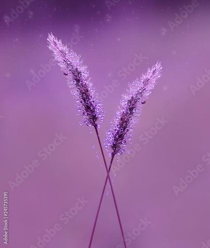 Purple - 245735395
