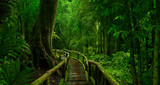 Fototapeta Bambus - Asian tropical rainforest © quickshooting