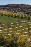 Allassac (Corrèze - France) - Pomiculture en automne