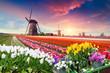 Leinwanddruck Bild - Dramatic spring scene on the tulip farm. Colorful sunset in Netherlands, Europe.