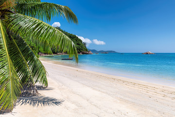 Paradise beach with white sand, palm trees and turquoise sea in tropical island.
