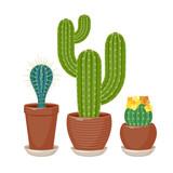 Cactuses set vector illustration. - 245916906