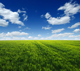 green field and clouds - 245917936