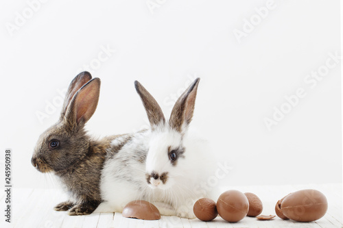 rabbits with chocolate eggs on white background - 245950938
