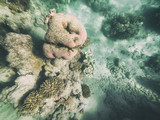 Downward view of corals underwater on a beautful ocean - 245958970