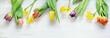 Ostern, Frühling, Osterglocken, Narzissen, Tulpen, Banner, Header, Headline, Textraum, copy space, auf Holz