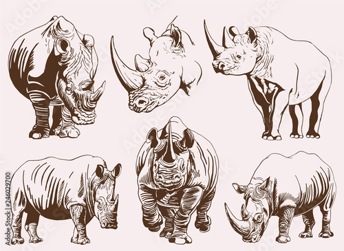 Graphical vintage set of rhinos ,retro illustration