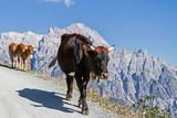 Kühe in den Leonganger Steinbergen