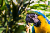 Close up of colorful macaw ara parrot in the jungle forest on a sunny day