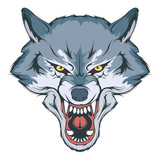 wolf head vector drawing, wolf face drawing sketch, wolf head colored drawing, vector graphics to design - 246125364