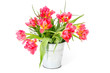 red tulips in a bucket on white background