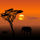 Elephant and lion at sunset vector