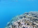 Corail et poissons tropicaux (Mayotte)