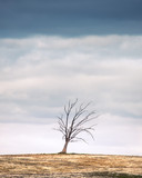 Árvore no horizonte - 246178163