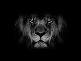lion face black and white  - 246195140