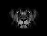 twarz lwa czarno-biała