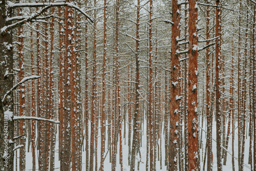 Winter in Europes forest
