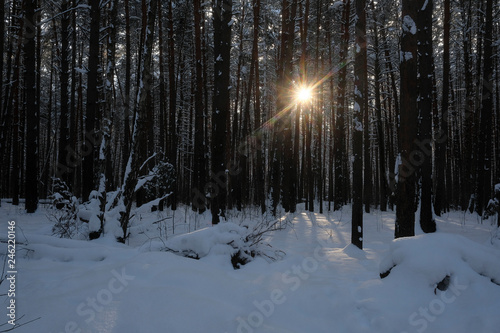 Landscape with the image of a winter forest - 246220146