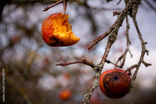 Foto Murales Winter Tage