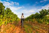 Kroatien, Istrien, Porec, Mountainbiker fährt an einem Weinberg