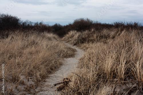Foto Murales Beach Dunes
