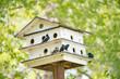 Birdhouse in outdoor national park in summer