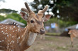 the deer in zoo
