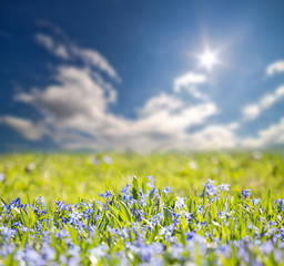 small blue flowers field under bright sun