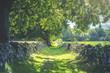canvas print picture - Wanderweg im grünen Südschweden