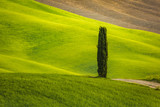 Tuscany landscape in spring green meadows of italia - 246376192