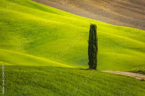 Foto Murales Tuscany landscape in spring green meadows of italia