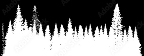 white fir forest isolated on black - 246379762