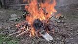Static shot of green waste fire in garden - 246387130
